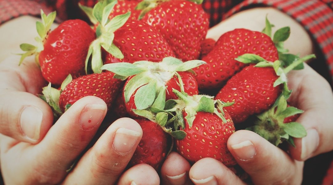 Fresh Fruit Vegetable Seasons